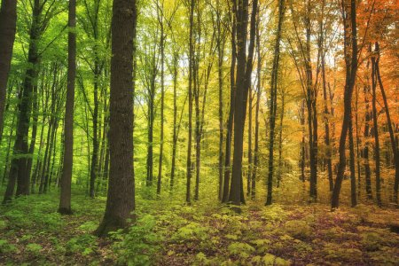 Photo pour La saison de l'année évolue dans la forêt - image libre de droit