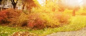 Panorama of colorful trees in a park in autumn, a lively landscape with the sun shining through the foliage