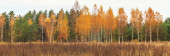 Autumn forest on a sunny day, background, golden autumn panoramic view