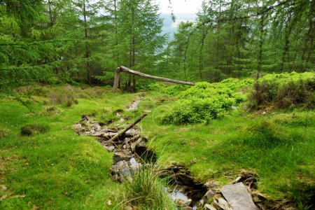 narrow stream flowing across woodlands of Wicklow Mountains National Park, Ireland