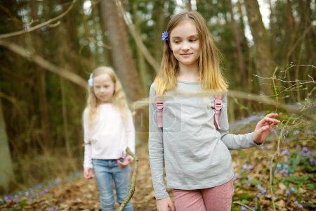 Photo pour Deux jeunes soeurs mignonnes s'amuser en forêt randonnée jour belle au début du printemps. Loisirs actifs de famille avec des enfants. Plaisir en famille. - image libre de droit