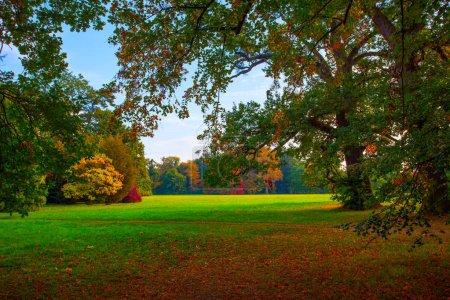 Photo pour Parc pittoresque avec de vieux arbres et grand pré - image libre de droit