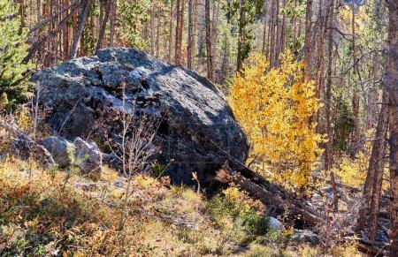 Photo pour Aspen grove at autumn in Rocky Mountain National Park. Colorado, USA. - image libre de droit