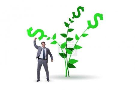 Photo pour Arbre à argent concept avec l'homme d'affaires dans les profits croissants - image libre de droit
