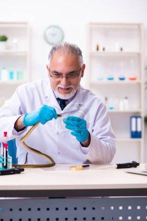 Photo pour Ancien chimiste tenant serpent au laboratoire scientifique - image libre de droit