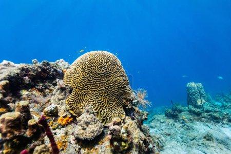 Photo pour Beau récif corallien coloré et poissons tropicaux sous-marins à Sainte-Lucie Caraïbes - image libre de droit