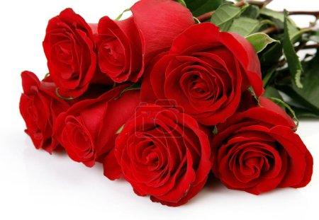 Photo pour Bouquet de roses écarlates sur fond blanc - image libre de droit
