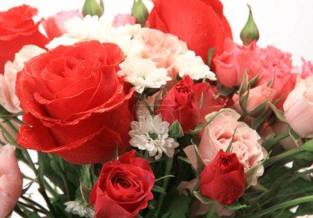 Foto de Ramo de rosas sobre un fondo blanco - Imagen libre de derechos