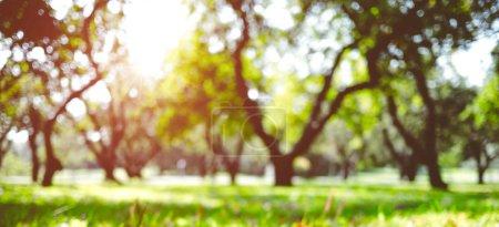 Photo pour Parc paysage extérieur. Été abstrait fond bokeh - image libre de droit
