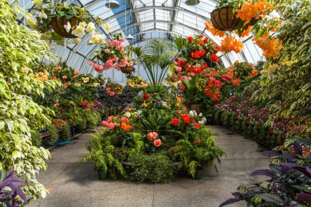 Foto de Maravilloso invernadero. Atrévete de flores y camas de flores. Jardín Botánico Scenico Christchurch. Viaje a Nueva Zelanda, Isla del Sur. El concepto de turismo ecológico y fotográfico - Imagen libre de derechos