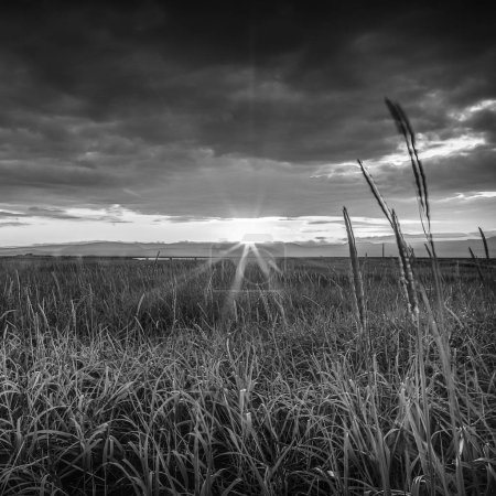 Picturesque landscape of a meadow with traditional nature of Iceland. Black-white photo.