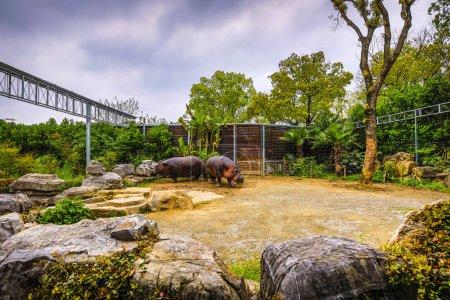 Photo pour Hippo dans le zoo de Shanghai . - image libre de droit