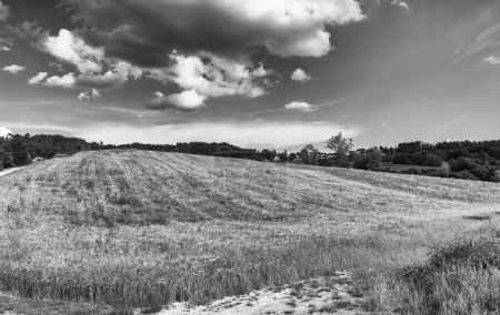 Photo for Tuscany, Italy. Rural sunset landscape. Countryside meadows, green field, sun light and clouds. - Royalty Free Image