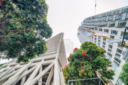SAN FRANCISCO - AUGUST 6, 2017: Transamerica Building with trees. This is a famous city icon.