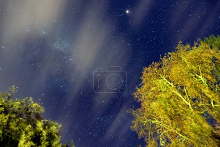 Starry night with forest trees in foreground.