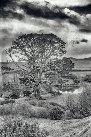 Photo for Beautiful hills and trees of New Zealand. - Royalty Free Image