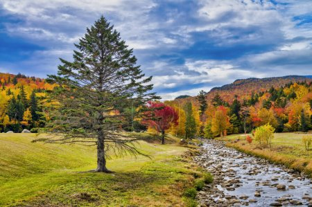 Photo for Beautiful creek of New England with tree and foliage background. - Royalty Free Image