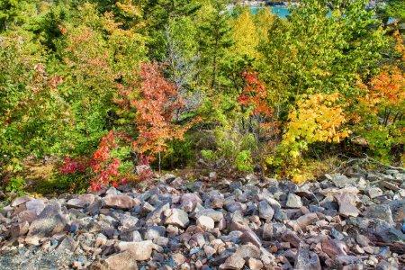 Photo pour Belle forêt de Nouvelle-Angleterre en saison des feuillages, États-Unis. - image libre de droit