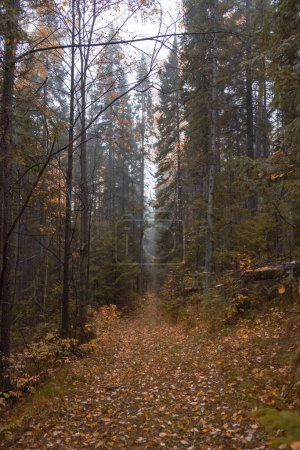 Photo for Autumn landscape. Russia. Ural landscape - Royalty Free Image