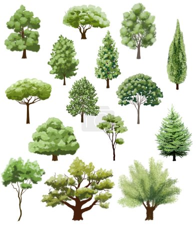 Photo for Various types of trees on white. hand drawn illustration - Royalty Free Image