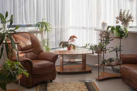 home interior with houseplants