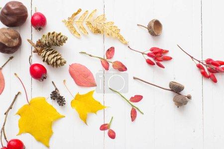 Photo pour Berriées rouges et feuilles d'automne sur fond de bois blanc - image libre de droit