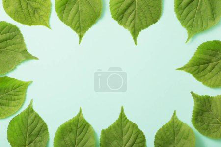 Photo for Green leaves on paper background - Royalty Free Image