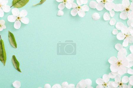 Photo pour Fleurs de cerise sur fond de papier - image libre de droit