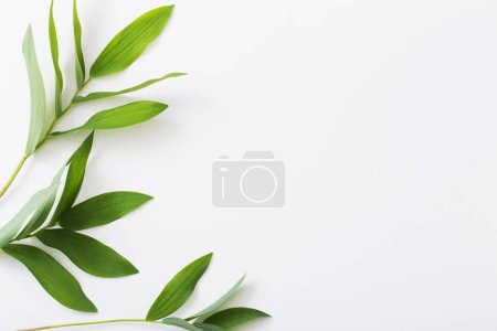Photo for Plants on white background - Royalty Free Image