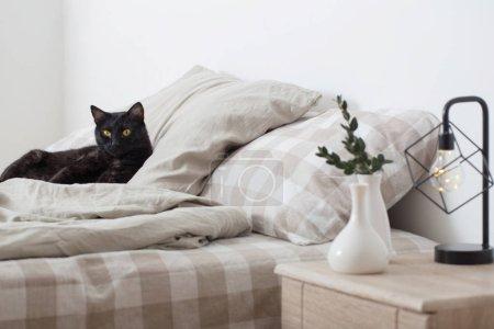 Photo pour Chat noir sur le lit dans la chambre - image libre de droit