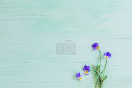 Photo for Viola flowers on wooden background - Royalty Free Image