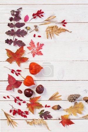 Photo pour Fond en bois naturel automnal avec décoration d'automne - image libre de droit