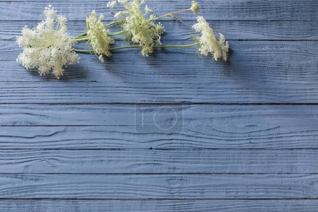 Photo for White wild flowers on blue wooden background - Royalty Free Image