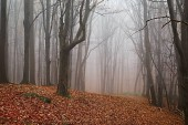 Autumn Forest Fog