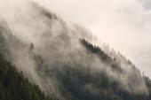 Mountain forest foggy landscape