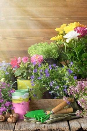 Seedling of garden plants and flowers. Garden equi...