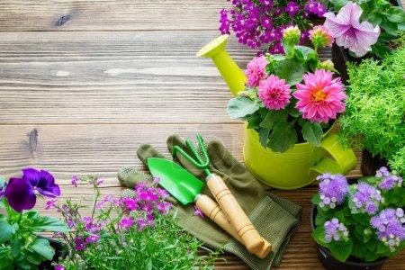 Seedlings of garden plants and flowers in flowerpo...