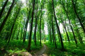 beautiful green morning  forest