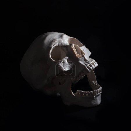 Photo pour Halloween. Crâne humain. Fond noir. Concept sombre espace libre - image libre de droit