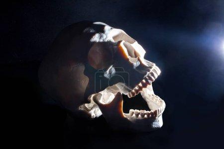 Photo pour Halloween. Crâne humain. Fond noir. Lumière dure du côté - image libre de droit