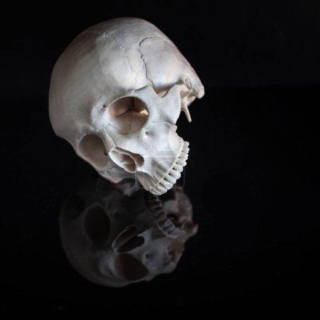 Photo pour Crâne humain, pas de mâchoire. Halloween. Sur fond noir brillant avec réflexion. Concept sombre espace libre - image libre de droit