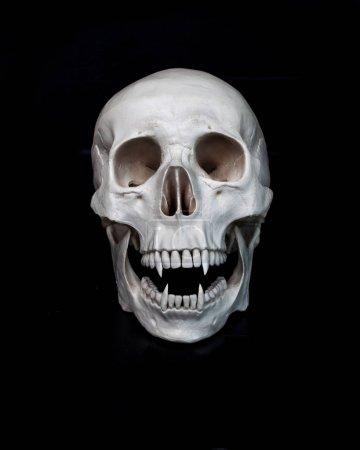Photo pour Vampire mort. Crâne humain avec crocs de vampire. Fond noir. Concept sombre espace libre - image libre de droit