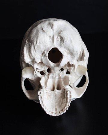 Photo pour Crâne. Crâne humain de l'intérieur. Fond noir. Concept sombre espace libre - image libre de droit