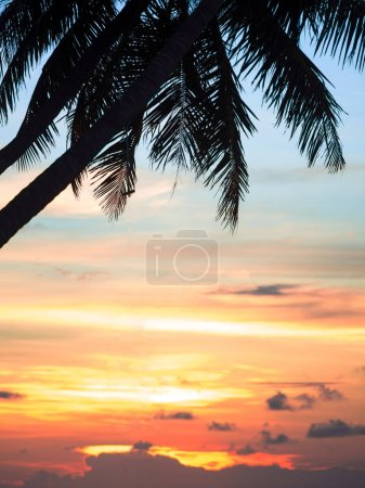 Photo for Amazing sunset and a silhouette palm tree leafs. Free space for text, tropical texture - Royalty Free Image