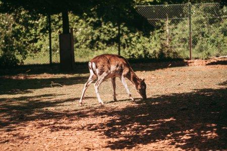 Photo pour Escher Dierpark, le parc animalier d'Esch sur Alzette - image libre de droit