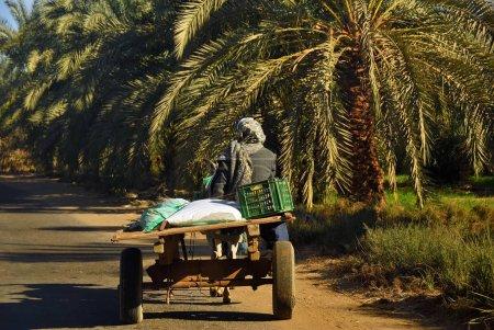 Photo pour Paysan égyptien promenades dans un chariot sur la route le long de la plantation de bananes. L'agriculture est l'un des secteurs les plus importants de l'économie égyptienne - image libre de droit