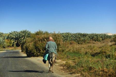 Photo pour Paysan égyptien monte sur un âne sur la route goudronnée le long de la plantation de bananes. L'agriculture est l'un des secteurs les plus importants de l'économie égyptienne - image libre de droit