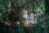 The view of the Gunung Kawi complex through a curtain of lianas. Gunung Kawi is a funeral complex with rock-cut tombs near Ubud, Bali, Indonesia