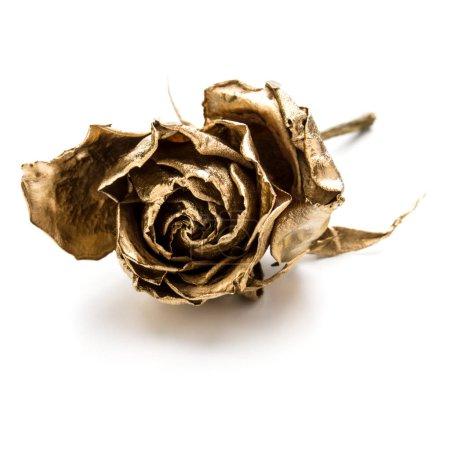 Photo pour Une rose d'or isolée sur fond blanc découpé. Tête de fleur séchée dorée, concept romantique . - image libre de droit