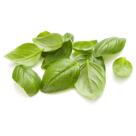 Photo for Sweet basil herb leaves handful isolated on white background closeup - Royalty Free Image